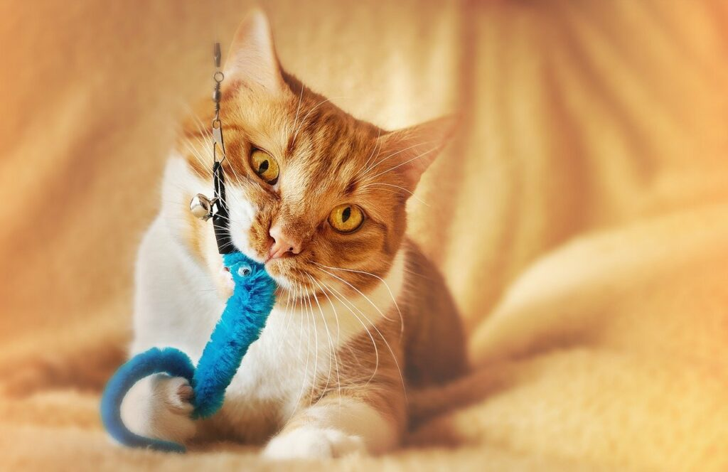 Best Cat Toys For All Cats