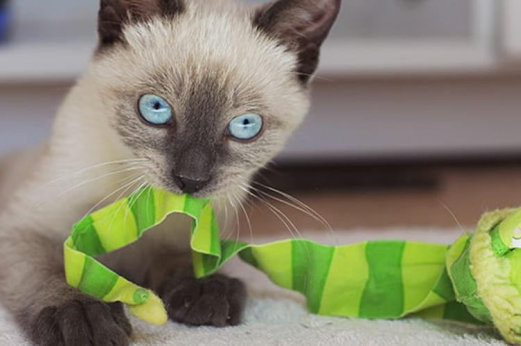 Challenging Cat Toys